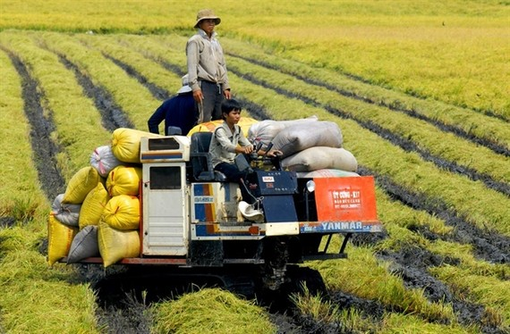 Farmers in An Giang Province harvest rice. Current challenges provide an opportunity for the agricultural sector to speed up the value chain restructuring and innovating the growth model. — VNA/VNS Photo