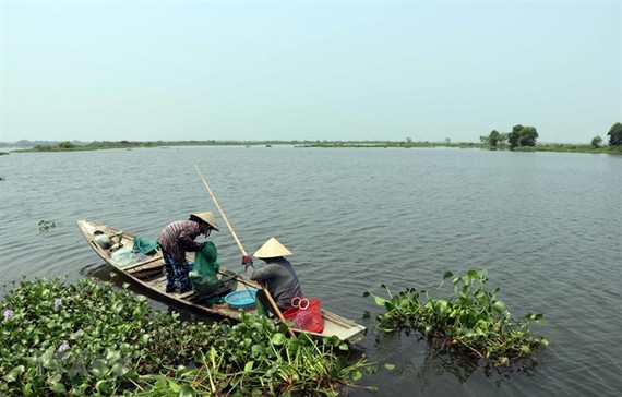Thua Thien – Hue Province will build a bird sanctuary in O Lau estuary area. — VNA/VNS Photo