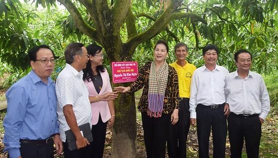 NA Chairwoman Nguyen Thi Kim Ngan and NA delegators  visit mango-planted My Xuong Commne in dong thap Province (Photo: SGGP)