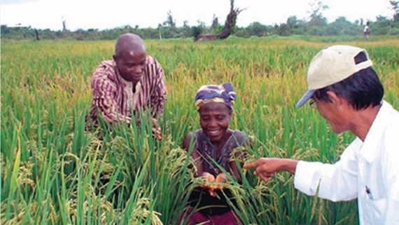 The happiness of African farmers from a Vietnam's rice supporting project (Source: Vietnam Agriculture)