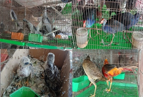 Wild birds are sold at Thanh Hoa Market in the southern province of Long An. — VNA/VNS Photo