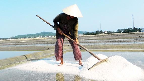 In a salt field ( Photo: SGGP)