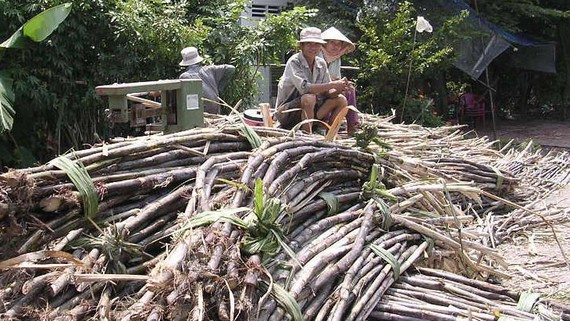 Sugarcane prices higher for making juice than making sugar