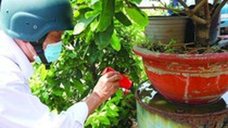 Mekong Delta region takes proactive step against dengue
