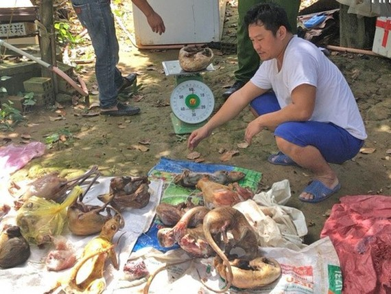 Police officers of Lam Dong province catch Nguyen Van Thanh in the act of restoring rare animals (Photo: SGGP)