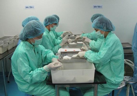 Covid-19 vaccine being trialed on monkeys in Vietnam