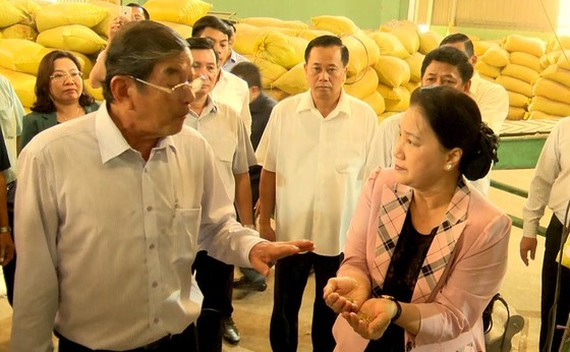 National Assembly Chairwoman Nguyen Thi Kim Ngan tours the production centre for ST25 fragrant rice in My Xuan district, Soc Trang province (Photo: SGGP)