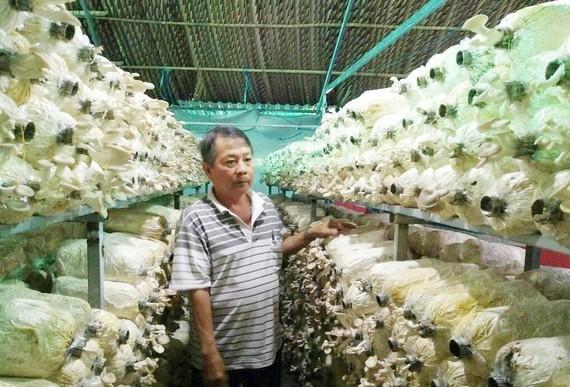A farmer uses the loan for growing mushroom (Photo: SGGP)