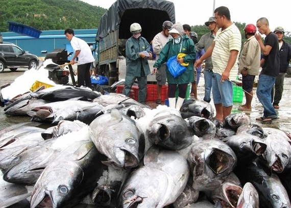 Tuna exports in 2021 are unlikely to recover due to the developments of COVID-19 (Photo: thuongtruong.com.vn)