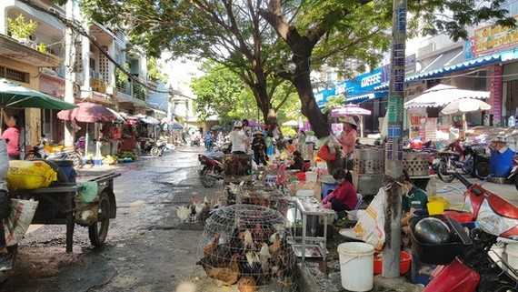 Slaughter and sales of live poultry in multiple makeshift poultry markets in Ho Chi Minh City (Photo: SGGP)