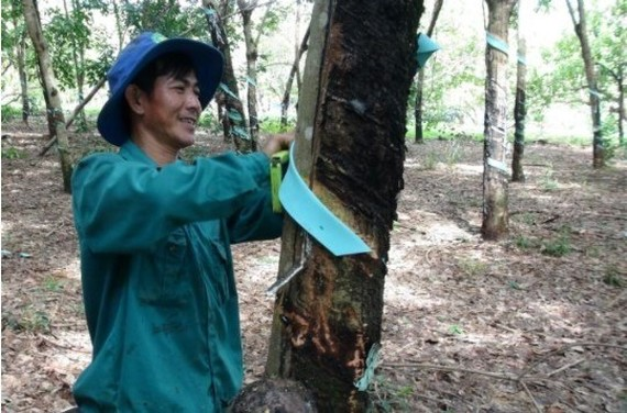 Vietnamese rubber producers benefit from higher prices in Q2