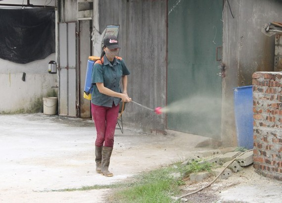 Spraying chemicals to sterilise breeding facilities (Photo: VNA)