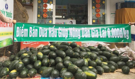 Many enterprises support Vietnamese fresh fruits in consumption (Photo:Le Nam)