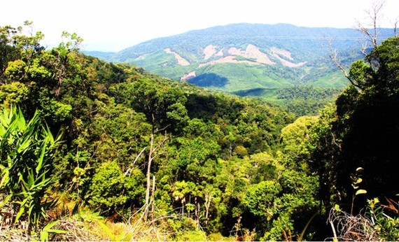 """Sustainable Forest Restoration and Management Project in the Central and the Northern regions of Vietnam"""" (KfW9 Phase 1) worth more than VND105 billion (more than EUR4.2 million)"""
