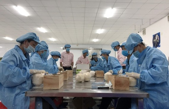 Fresh coconuts will be exported from Vietnam to EU market via seaway.