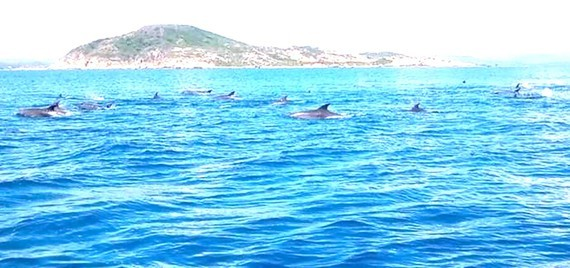 Dolphins leapt fast from the water.