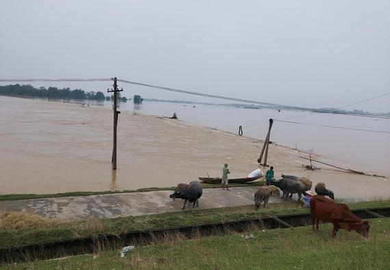 Floodwater kills seven people in Nghe An Province