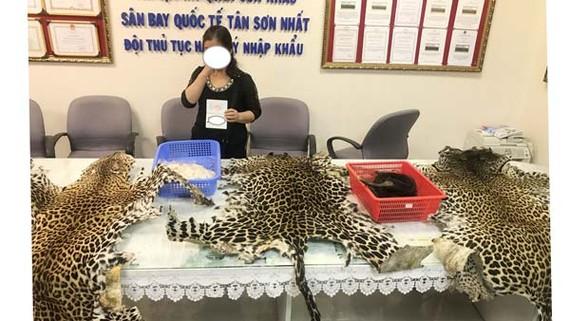3 bộ da của loài báo gấm châu Phi trong lô hàng nhập lậu bị bắt giữ. Ảnh: Cơ quan chức năng cung cấp