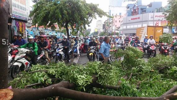 Nhánh cây gãy chắn ngang đường làm giao thông ùn ứ