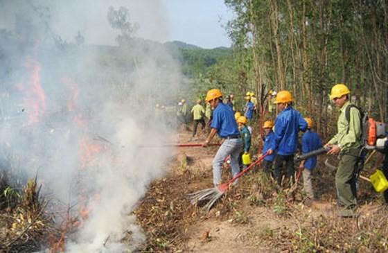 Đắk Nông chủ động phòng chống cháy rừng mùa khô