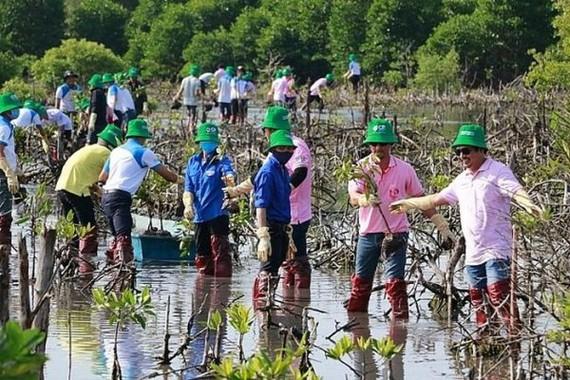 Trồng 1.500 cây đước đôi tại rừng phòng hộ ven biển