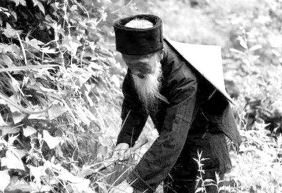 Hái thảo dược từ trong vùng núi sâu (Nguồn: Công ty cung cấp)