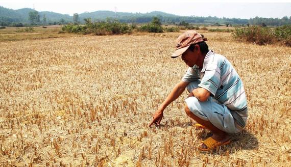 Nhiều khu vực, địa phương ở Việt Nam đang bước vào mùa khô hạn. Ảnh minh họa: NGỌC OAI