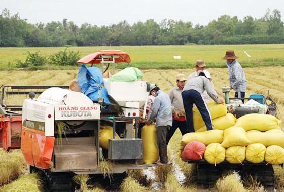 ĐBSCL: Vụ lúa hè thu ước đạt hơn 8,5 triệu tấn