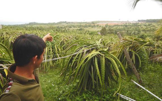 Người dân bức xúc vì trang trại heo quy mô lớn gây ô nhiễm