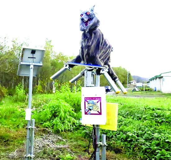 Robot sói phòng gấu hoang