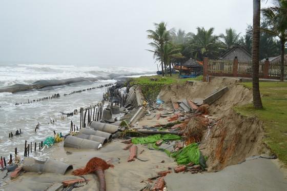 Bờ biển Cửa Đại (TP Hội An, Quảng Nam) cũng bị sạt lở nghiêm trọng