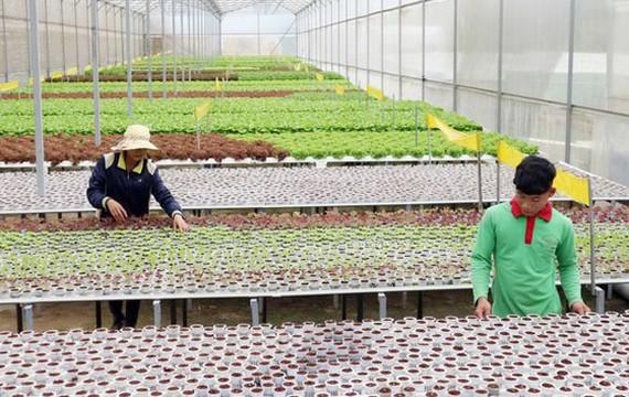 Nông nghiệp bền vững tăng năng suất