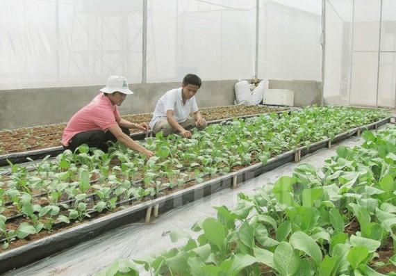 本市農民種植無公害蔬菜。(圖源:市黨部新聞網)