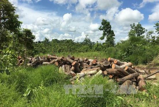 政府總理阮春福昨(31)日責成達樂省人委會主席指導檢討在該省非法砍伐樹林的個人、集體責任。(圖源:越通社)