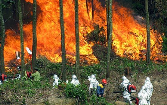 廣寧省錦譜市發生林火。(示意圖源:互聯網)