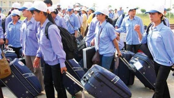自年初至今,金甌省已有逾70人登記出國有期限工作。(示意圖源:互聯網)