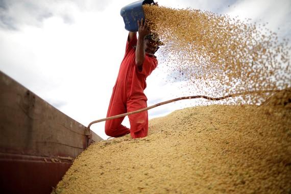 印度決定對美國包含豆類在內的29項產品加徵關稅。(圖源:路透社)
