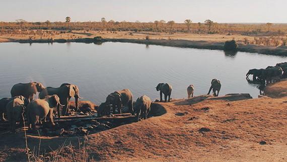 一群大象在湖邊喝水。(圖源:互聯網)
