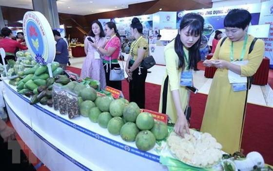 本市舉辦貿易促進會推介各省農產品。(圖源:名藍)