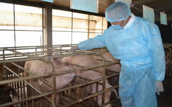 農業與農村發展部副部長馮德進實地視察同奈省的一家養豬場。(圖源:陳忠)
