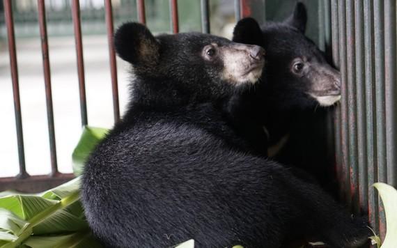 兩頭馬熊現已得到獸醫人員精心照料,體康穩定。(圖源:Four Paws)