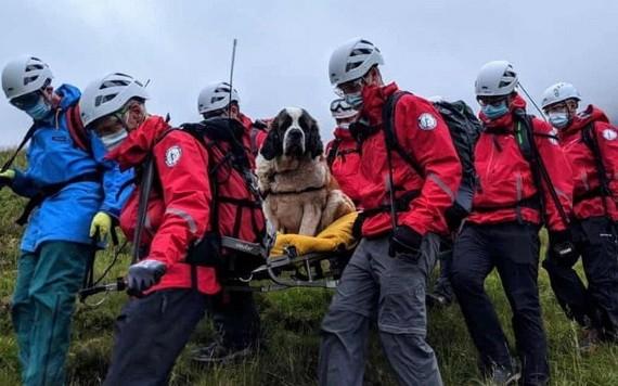 救援隊員合力用擔架將狗狗(中)抬下山。(圖源:互聯網)