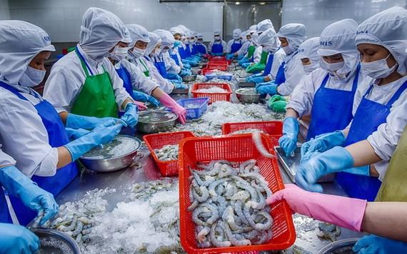 EVFTA 協定生效後蝦類出口獲益良多。(圖源:潘清强)