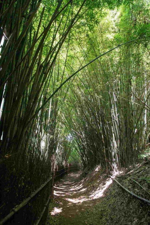 台灣6個「絕美竹林秘境」 走一趟「享受滿滿芬多精」忘卻憂愁