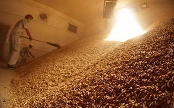 稻穀堆滿糧倉。(示意圖源:互聯網)