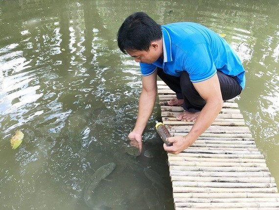 飛躍的老生魚群將獲得阮成心用奶瓶來餵吃。