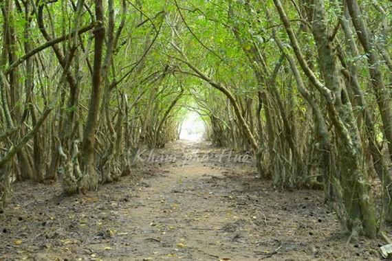 順化市的茹查樹林