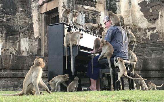這場特殊的音樂會旨在引起人們對這群饑餓的猴子的重視。(圖源:路透社)