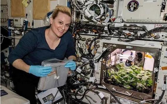 美國女性宇航員凱特·魯賓斯檢視國際空間站種植的蘿蔔。 (圖源:CNN)
