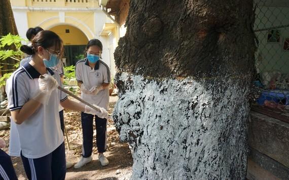 打掃與在樹木塗漆工作不僅男生喜歡,而不少女生也十分願意參加,希望校園美化。